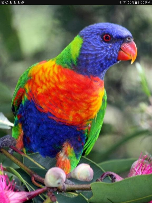 Cottage by the Bay - Rainbow Lorikeet