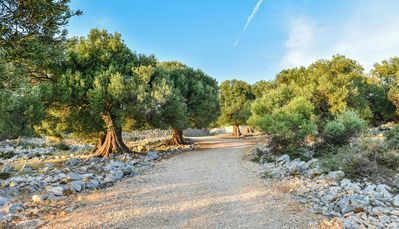 Entrance up the drive amongst the olive groves
