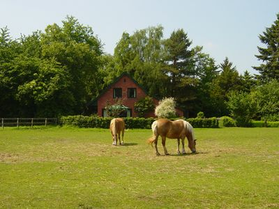 Photo for Newly furnished, cozy, four-star vacation home with (private) horse usage