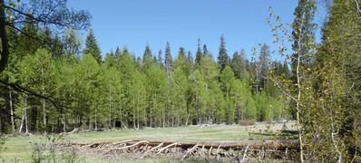 Ponderosa Aspen Ark Meadow in front of the property!