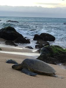 There is a coral reef about 50 yards from our place that is a home to turtles.