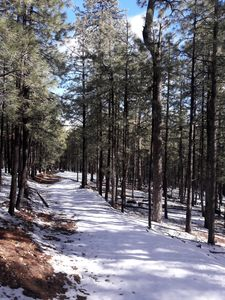 Photo for Very Private & Secluded Space in Beautiful Tall Ponderosa Pines!