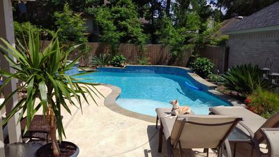 Gorgeous private pool, pup not included!