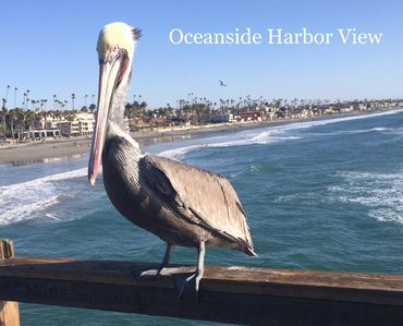 Say hello to Pete our Pelican. He loves Oceanside Harbor View and you will too.