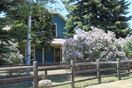 Lilacs in Bloom (mid/late May)