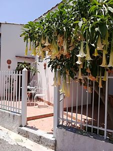 Photo for Superb Holiday House Two Steps From The Spectacular Sea In Palermo