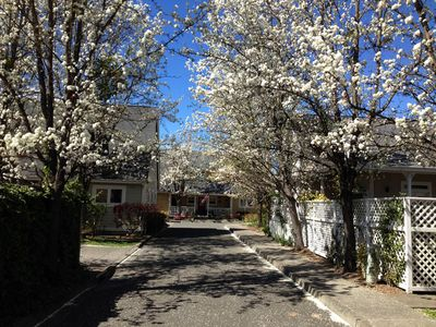 Spring Flowering Trees on our Private Lane