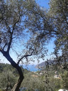 Photo for Close to 5 Terre apartment on Farm 1400m from the sea in olive grove