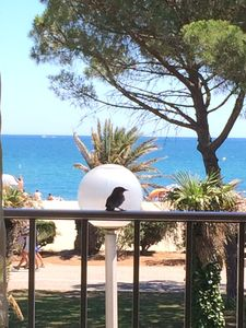 Photo for Large apartment, exceptional sea view, seafront, Argeles Plage, 85 m²
