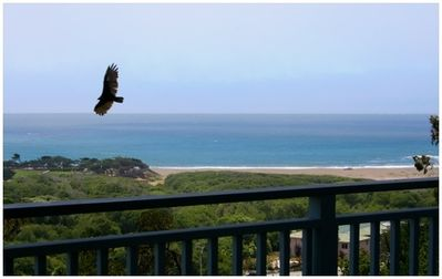 Photo for Ocean Pines Retreat on Happy Hill