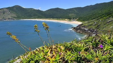 Photo for Piece of Paradise - Florianopolis