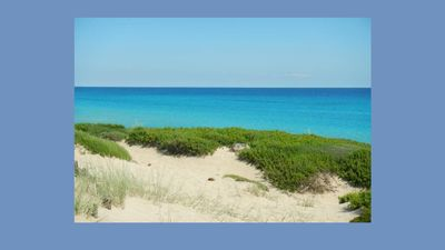 Photo for The most beautiful dunes of Salento