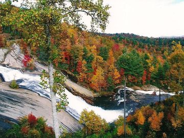 Gorges State Park, Lake Toxaway, NC, USA