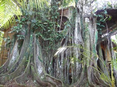 Photo for Caribbean Jungle Tree House