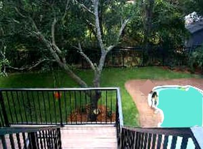 Private 16 x 32 Pool! Huge Live Oaks! Paint a picture!