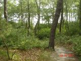 Private 3.5 acre wooded  setting with lakefront beach perfect for large groups
