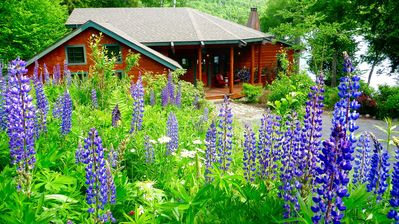 "Welcome to Camp Mange Takk. June ""is lupine season (the purple flower)."