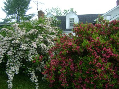 Blooming shrubs on driveway entry