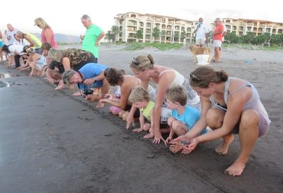There are turtle nests on our beach. In Oct-Nov the babies are released.
