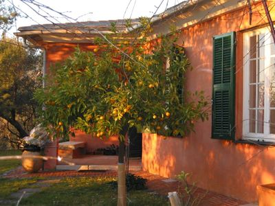 Photo for House with a large olive trees garden