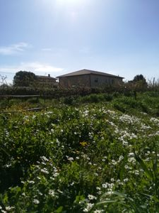 Photo for 70sqm apartment on the sea among the olive trees near Follonica