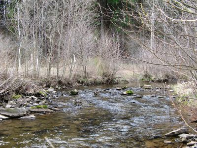 Your Personal Classic Potter County Trout Stream on The Property