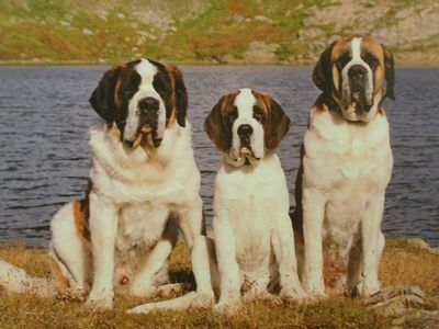 Nendaz Apartment Rental   Visit The St Bernard Museum And Meet These Lovely  Dogs   Approx