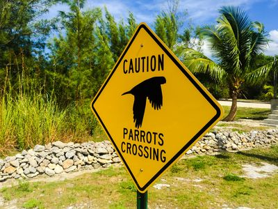 """""""PARROTS CROSSING"""" sign at the entrance of Long Beach private community."""
