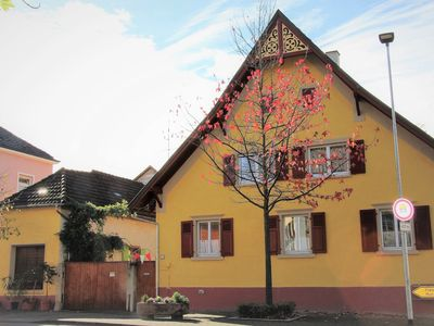 Photo for Apartment / app. for 4 guests with 72m² in Breisach am Rhein (69249)