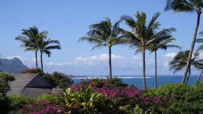 Photo for Experience the Island Paradise of Kauai's North Shore from above the Treetops.