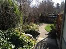 A bit of our gardens, compete with apple, pear, plum, fig, and walnut trees.
