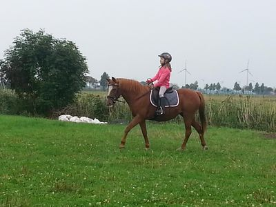 Photo for Horse farm with pony riding!  Accessible! from 1. 5. with 2. Floor!!!