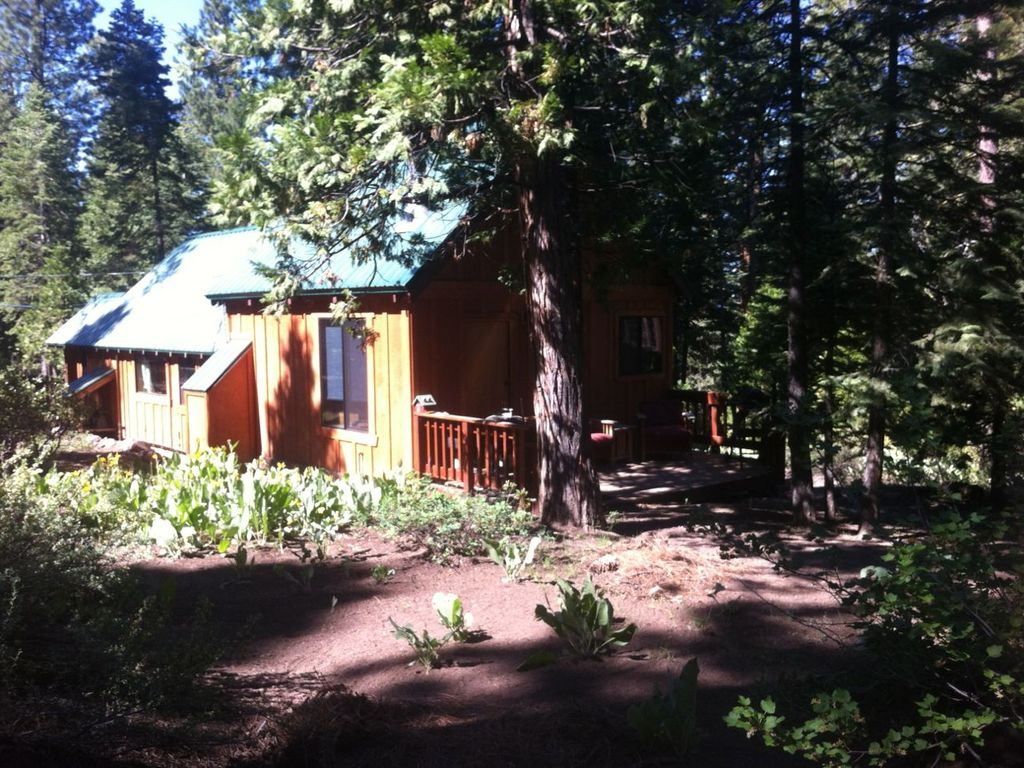 serene tahoe cabin bordering the national forest kings