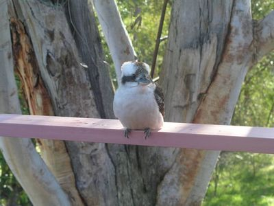 Photo for Kookaburra Dreaming - Only 400m from the beach