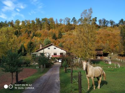 Photo for family and spacious cottage in the middle of the forest ideal hikes in the country of bitche