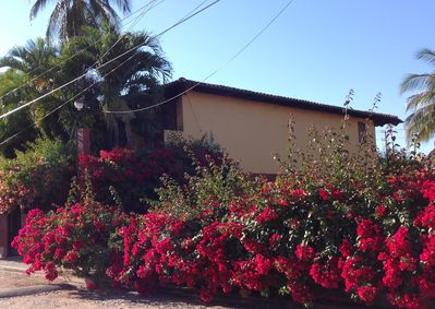 hidden in  garden and surrounded by bougainvillias