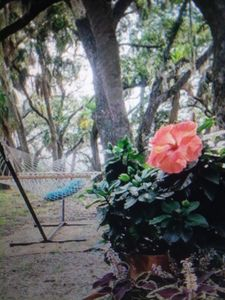 Photo for Guest House/pension Vacation Rental in St Helena Island, South Carolina