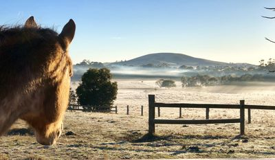 Photo for Cozy Fox - True Country Paradise (near Daylesford) *Wifi included*