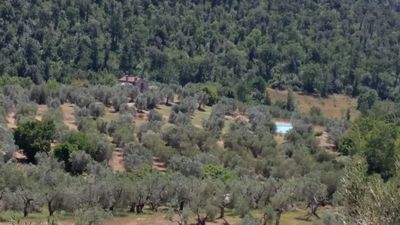 Photo for WONDERFUL ISOLATED OLD TUSCAN HOUSE WITH SWIMMING POOL IN 30000 sm OF OLIVE TREE