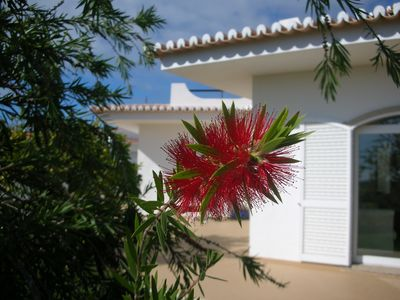 Front of Villa with beautiful bottle brush tree.