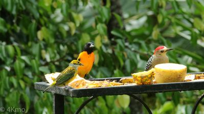 Some of my guests enjoying the fruit other guests have shared with them.