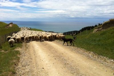 Mustering with sea views