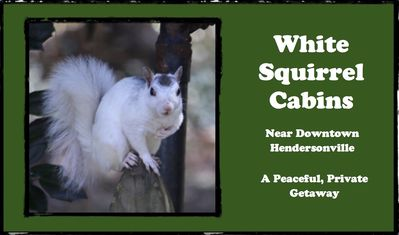 Photo for Blue Jay Cabin at the White Squirrel Cabins - PET FRIENDLY!