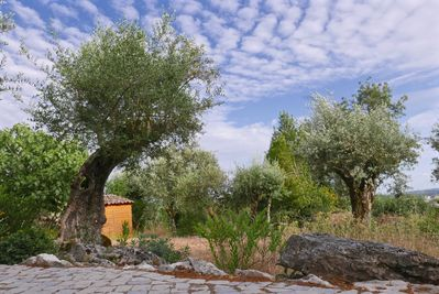 Enjoy the view into small olive grove / garden