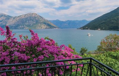 Photo for 2 bedroom accommodation in Kotor