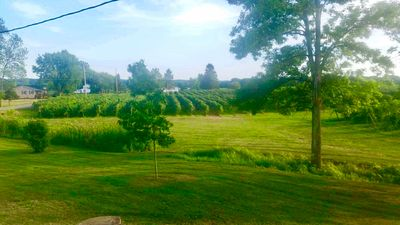 Photo for Moore In The Vineyards: Where Peace Is The Key..