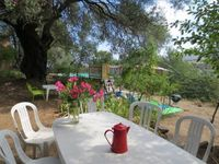 Rural charm beneath an ancient olive tree