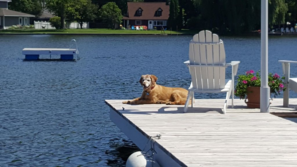 Dog Boarding Spring Lake Mi