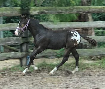 Photo for GLAMP  ON AN APPALOOSA  HORSE STUD IN HIGH COUNTRY VICTORIA