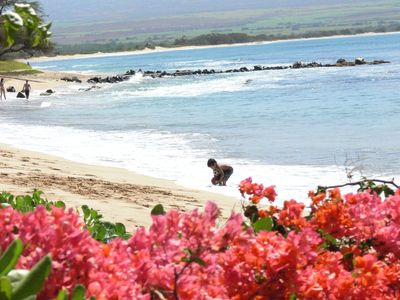 Photo for Maui New Account Savings! Right On The Beach, AC in bedroom (sleep cool/comfy)